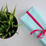 succulent and gift